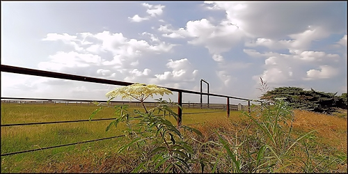 Ranch Country on Texas Farm Road 95 at Chireno, Texas in Historic Nacogdoches County